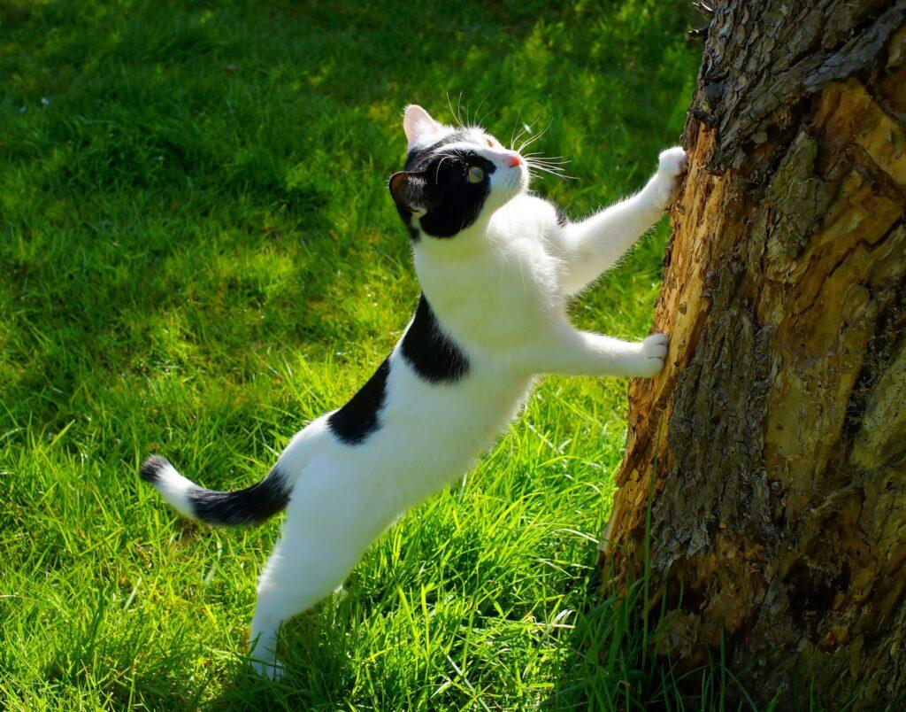 gatto cerca insetto