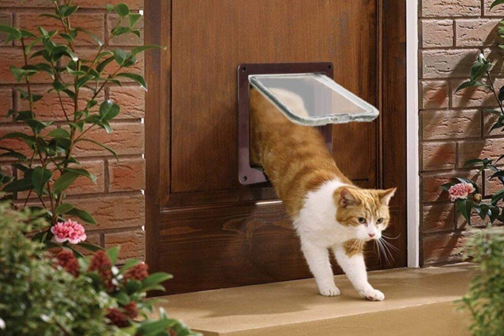 gatto che usa la gattaiola