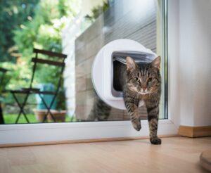 gatto che usa la porticina