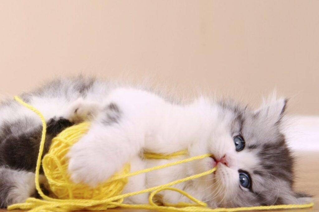 gattino con gomitolo di lana giallo