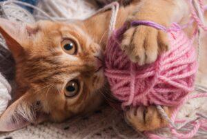 gatto gioca con lo spago