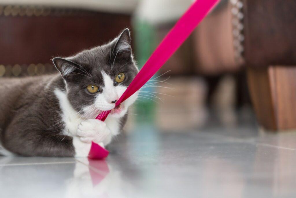 gatto che tira un laccio