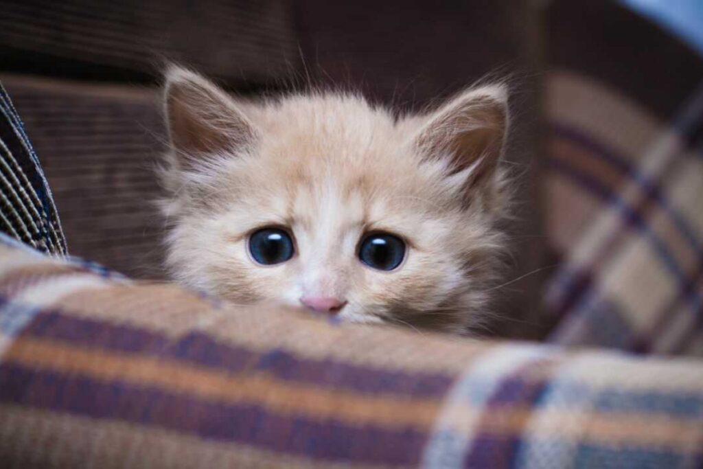 gatto intimorito