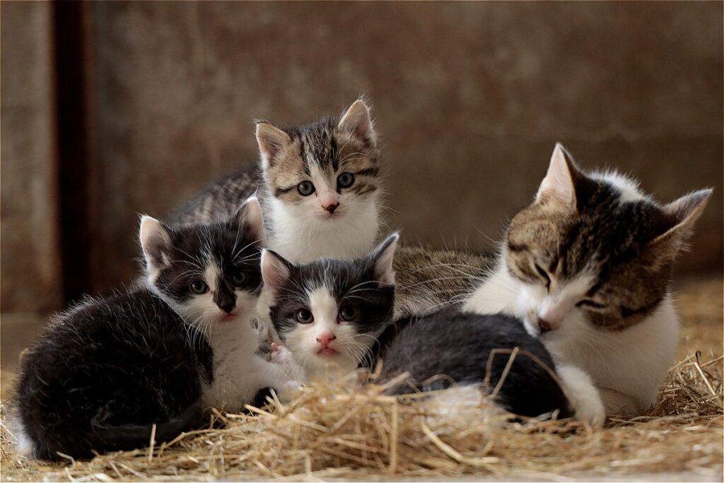 gatta e piccoli