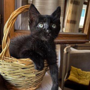 gattina recuperata dalla strada
