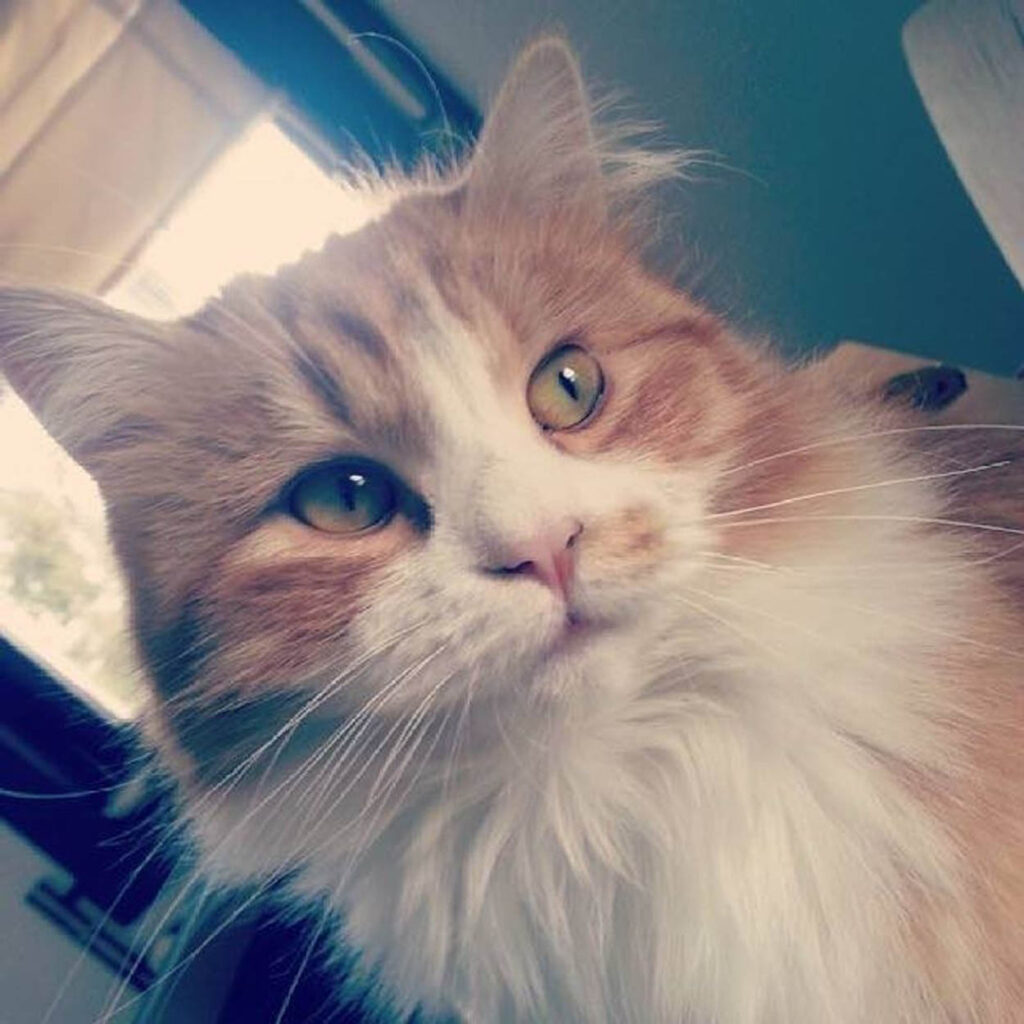 muso di gatta rossa