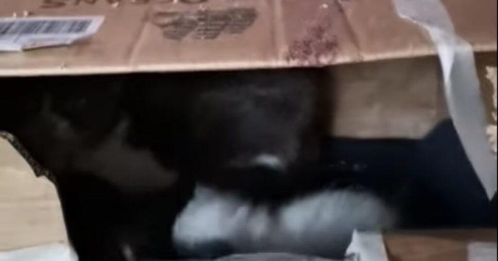 scatola con dentro gattini