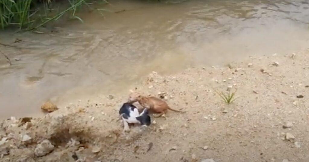 Due gattini salvati mentre stavano per annegare