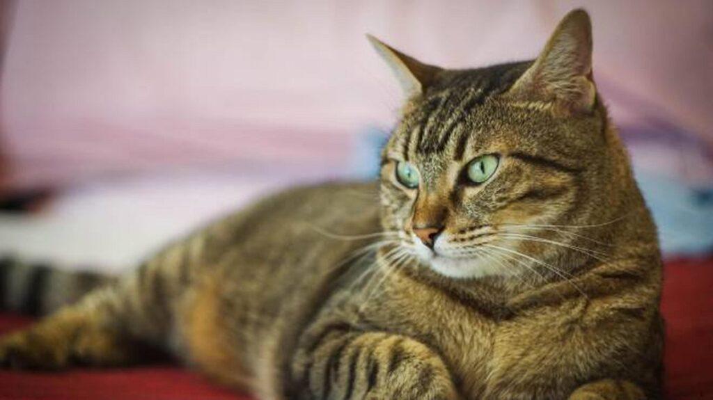 gattino investito caduto da un ponte