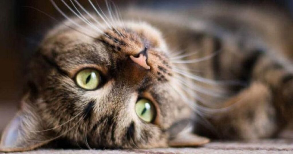 gattino caduto da un ponte