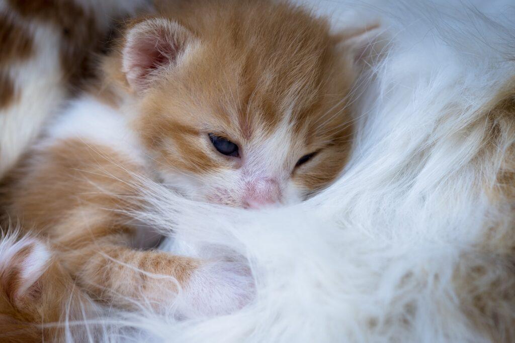 gatto cucciolo nato da poco
