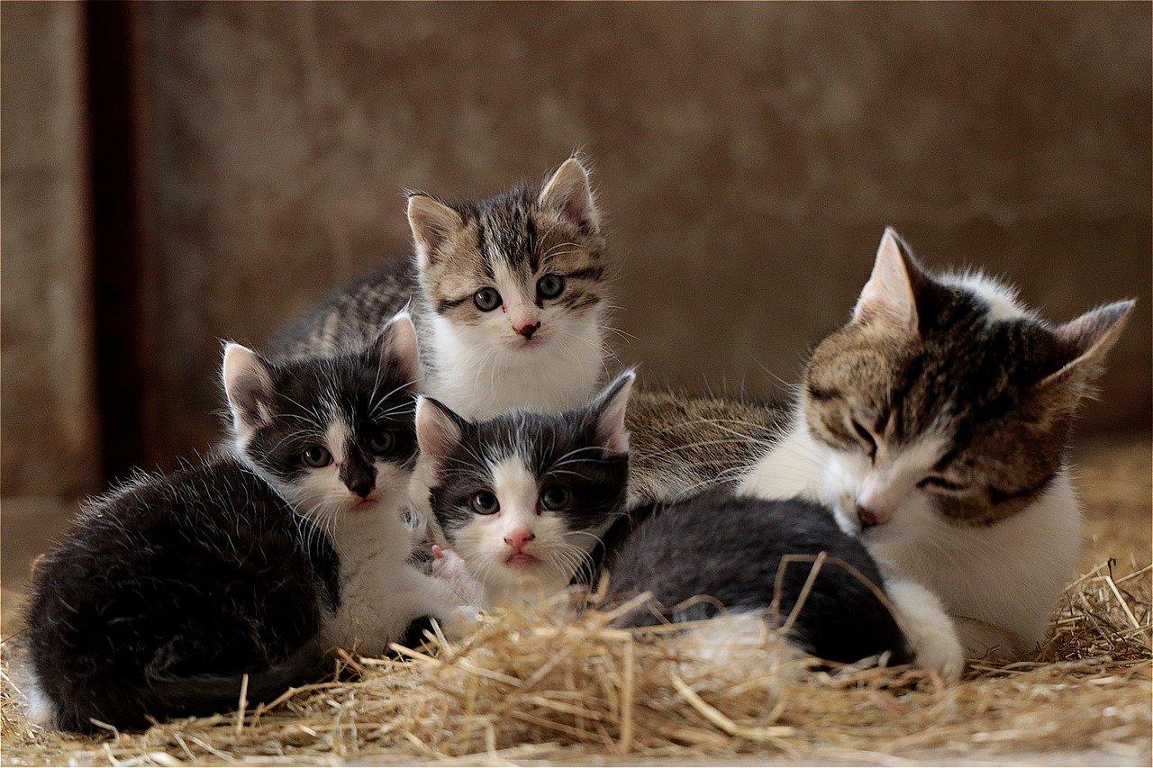 cuccioli di gatto con mamma