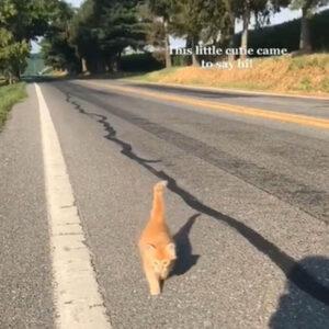gattino arancione in strada