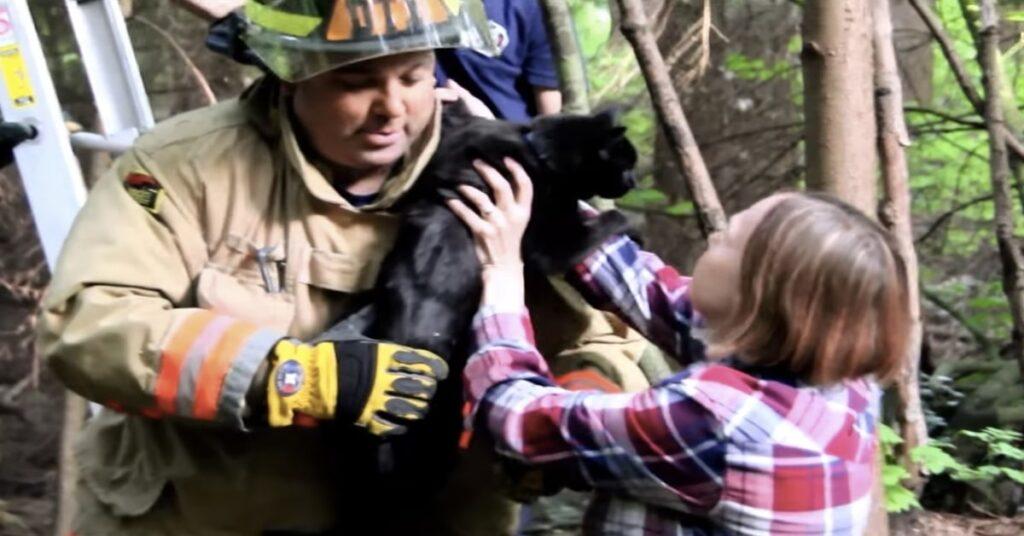 pompiere restituisce gatto a proprietaria
