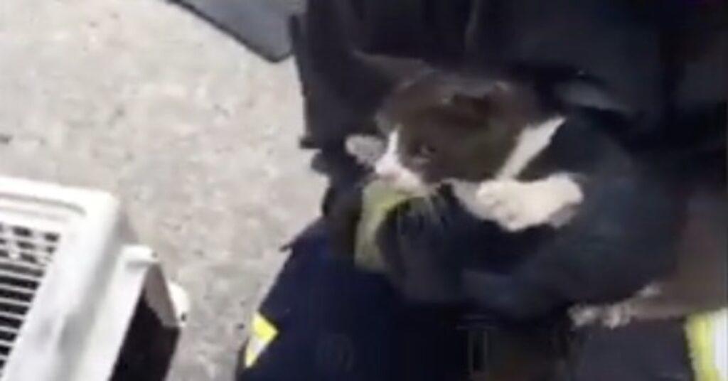 gatto bloccato su una pianta salvato