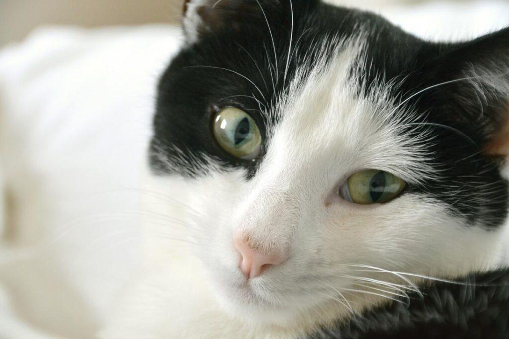 gatto dolcissimo