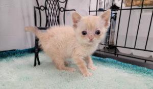 gattino bianco malato