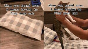 gatto nascosto nella federa