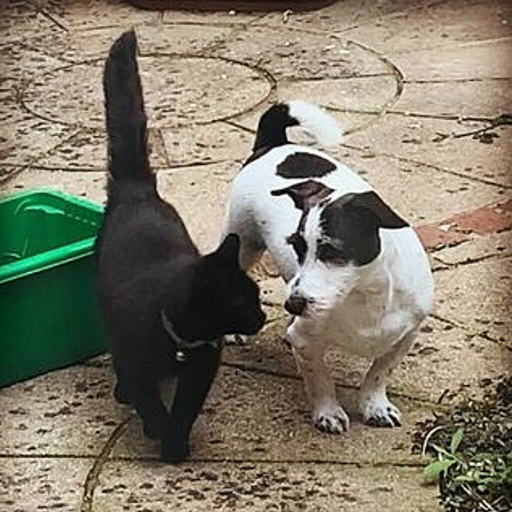 gattina nera con jack russell
