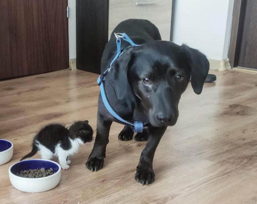 cane e gatto fanno amicizia