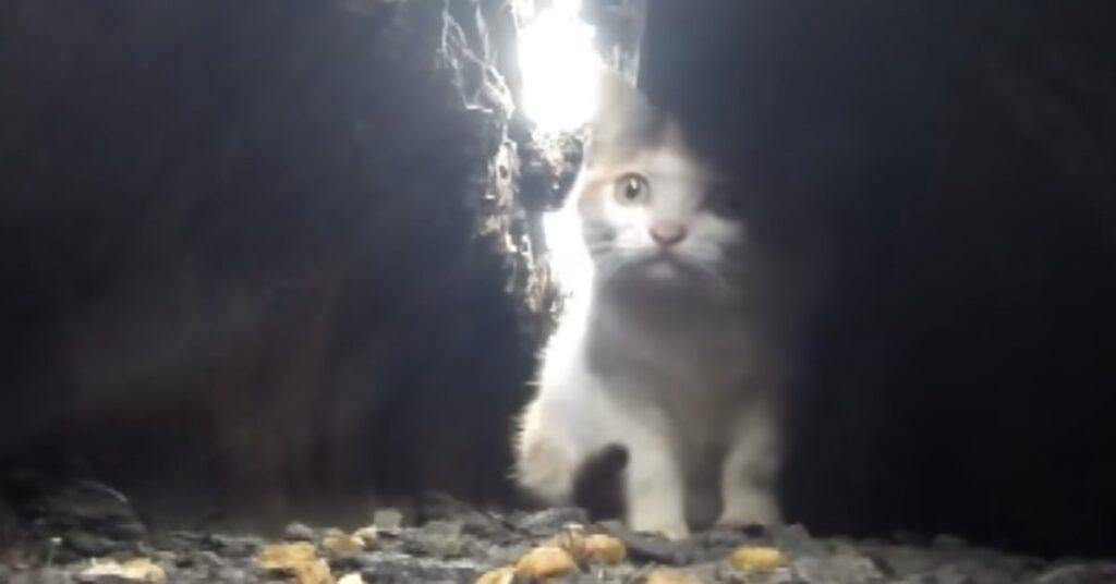 gattina in trappola