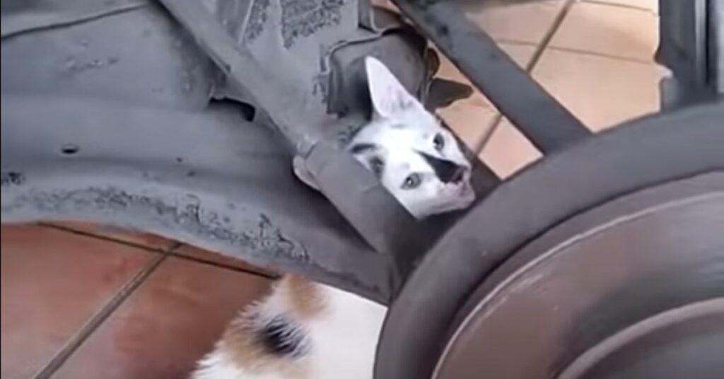 gatto incastrato viene salvato
