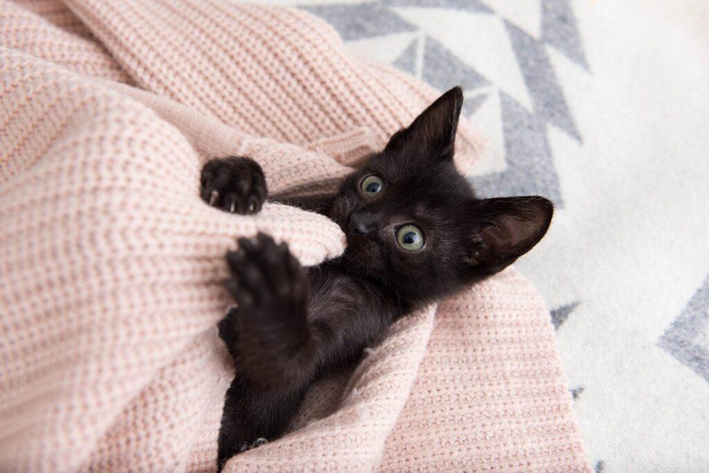 gattino nero che gioca