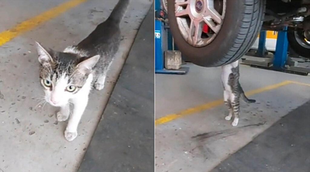 gatto in officina