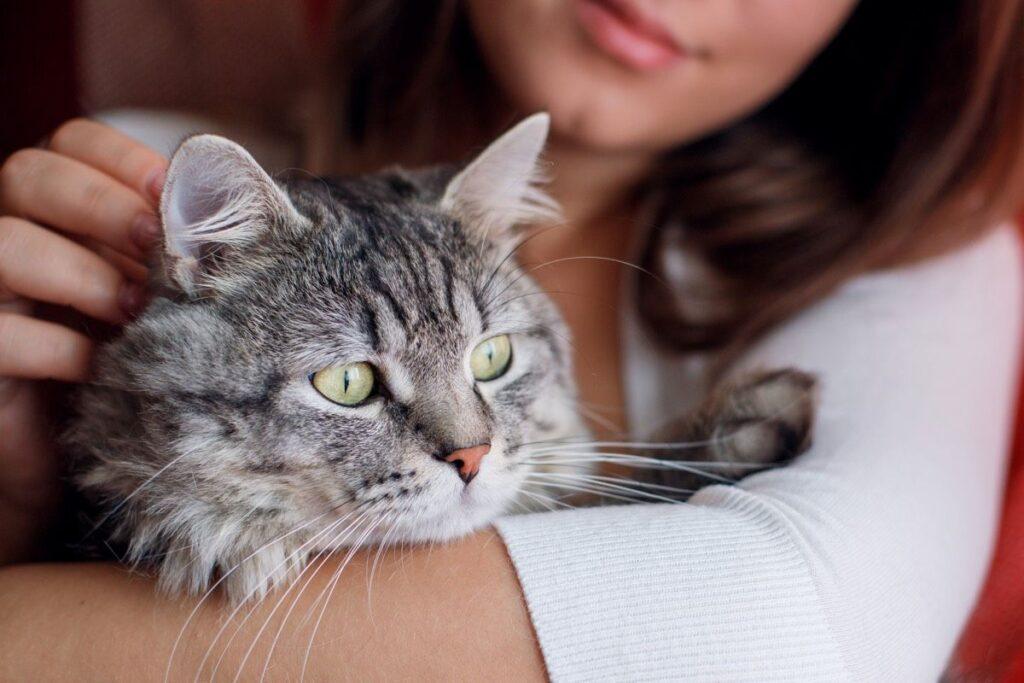 gatto in braccio a una donna
