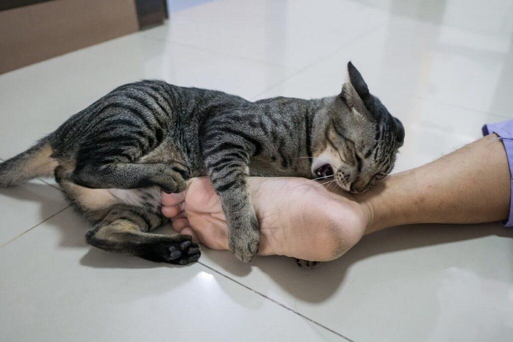 gatto tigrato sul pavimento