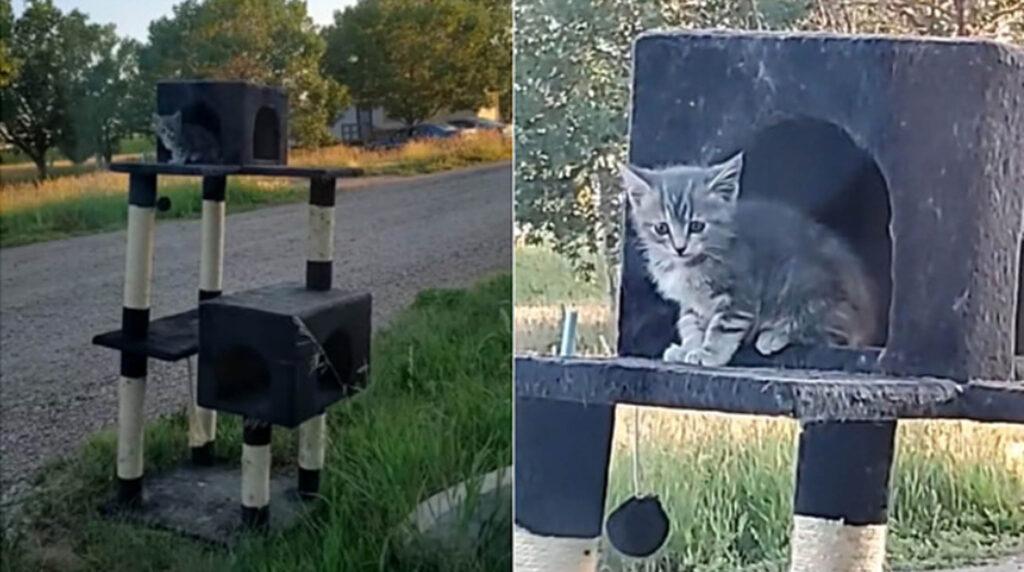 gattino grigio su cuccia a più piani