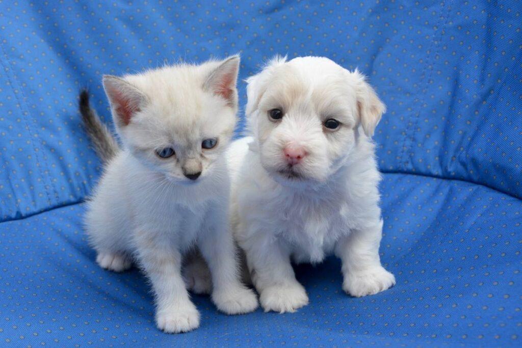 cuccioli di gatto e cane