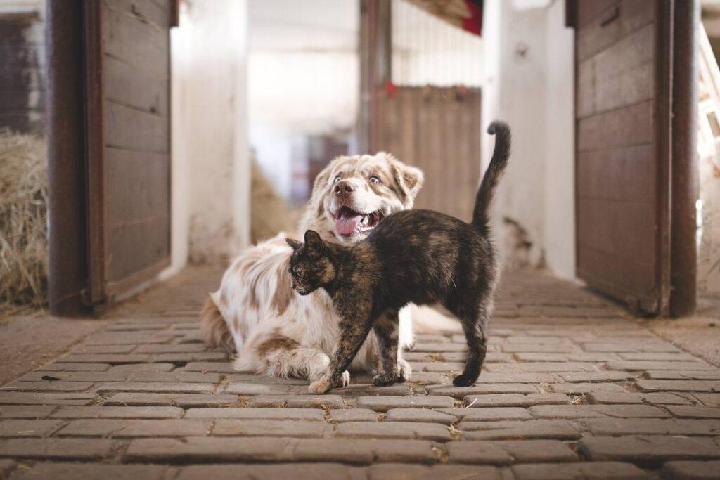 gatto che fa le fusa a un cane