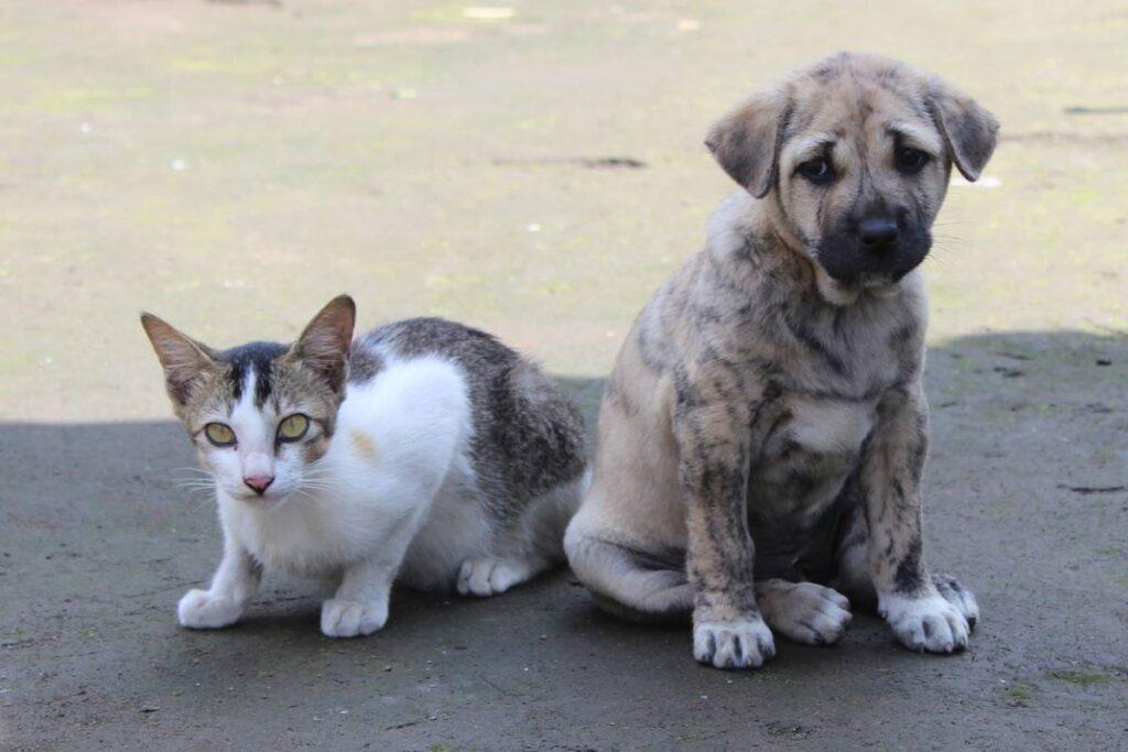 gatto con cucciolo di cane