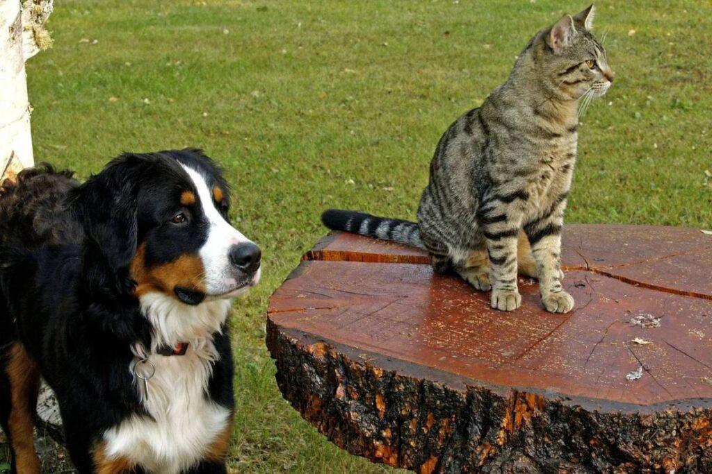 cane che guarda un gatto