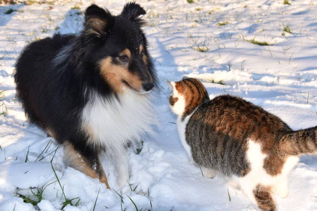 gatto soffia a un cane