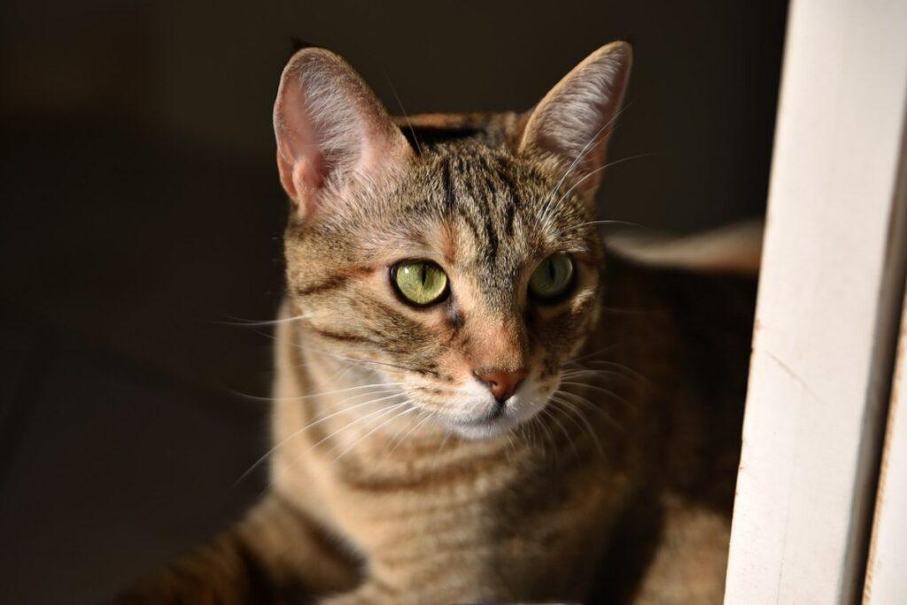 gatto seduto sul pavimento
