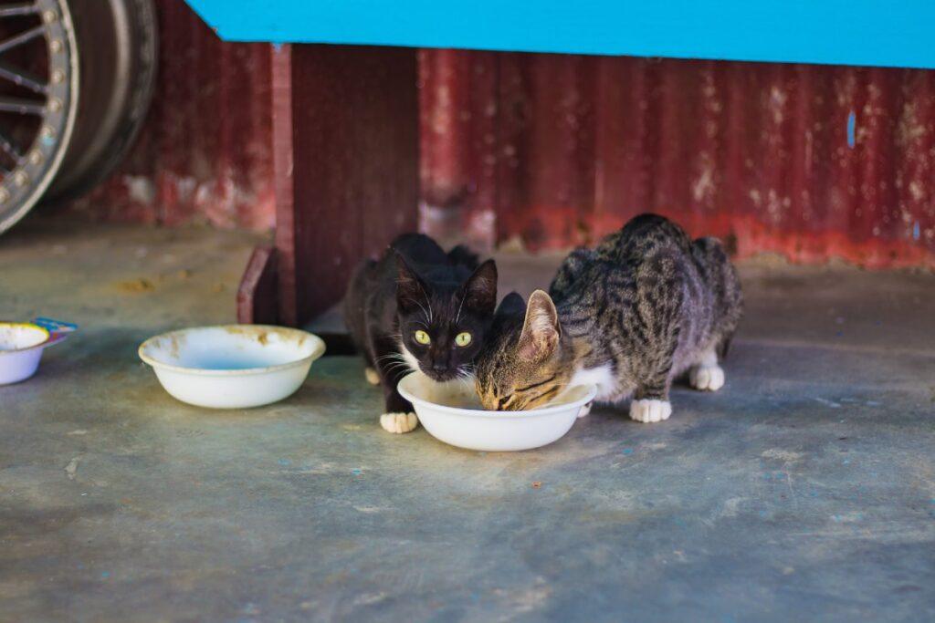 gattini e ciotole