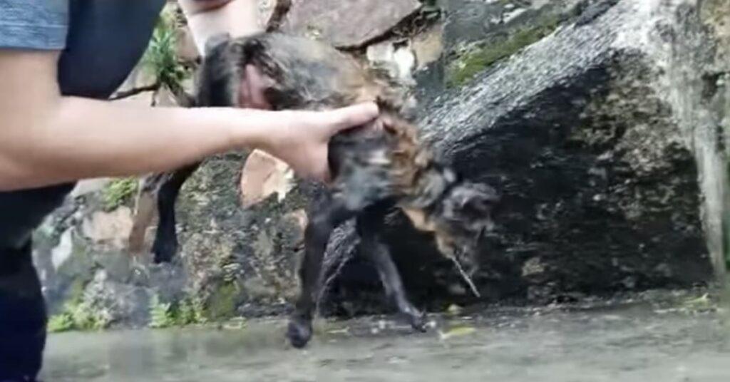 gatto che ha bevuto acqua del mare