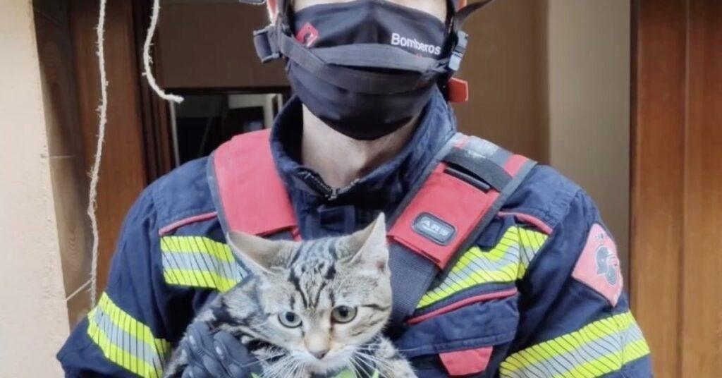 gatto salvato dai pompieri