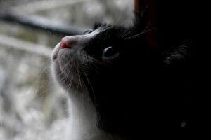 gatto guarda la pioggia