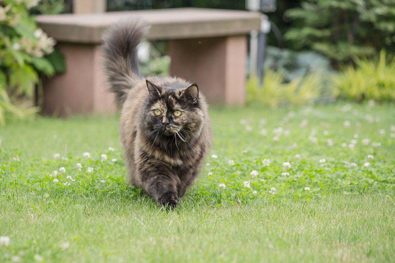 gatto coda alta