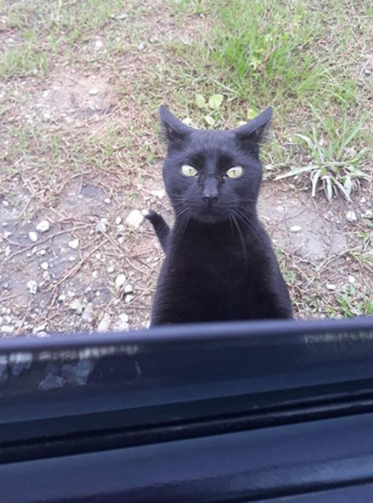 gatto nero affacciato al finestrino