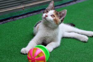 giochi che piacciono ai gatti