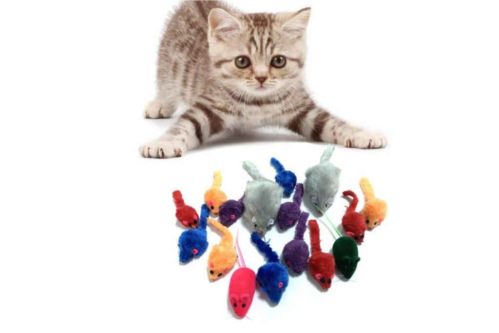 gattino con topini