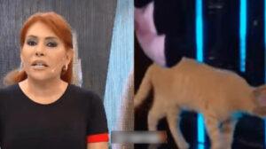 gatto in diretta tv