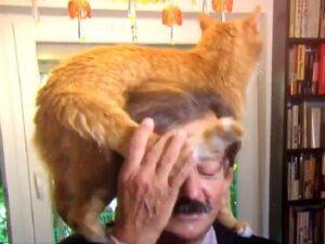 gatto che disturba il padrone