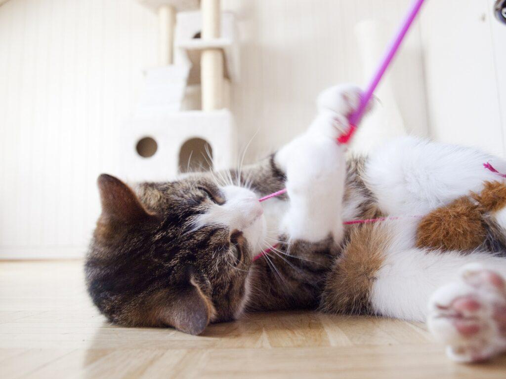gatto gioca con un filo