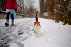 gatto cammina accanto alla padrona