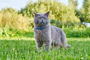 gatto con collare in giardino